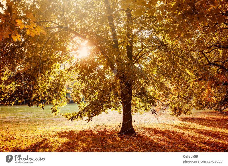 Der Herbst in der Natur Park fallen Baum gelb Saison Landschaft Wald natürlich Laubwerk Umwelt Licht hell Sonne rot orange Blatt Sonnenlicht Hintergrund sonnig