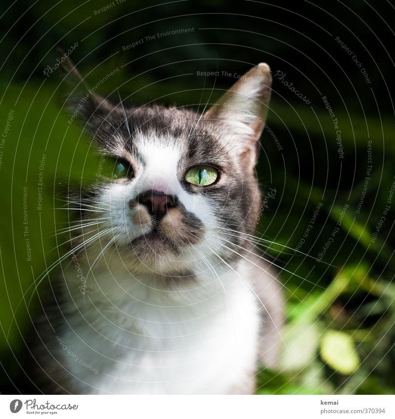 AST6 Inntal | Freunde für einen Augenblick Tier Haustier Katze Tiergesicht Fell 1 außergewöhnlich schön niedlich grün Ohr Schnurrhaar Farbfoto Außenaufnahme