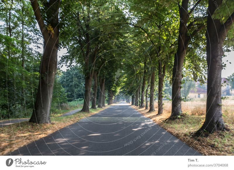 """Brandenburg Allee bäume"""" Baum Natur Wege & Pfade Straße Landschaft Außenaufnahme Menschenleer Farbfoto Zentralperspektive Verkehrswege Textfreiraum unten"""