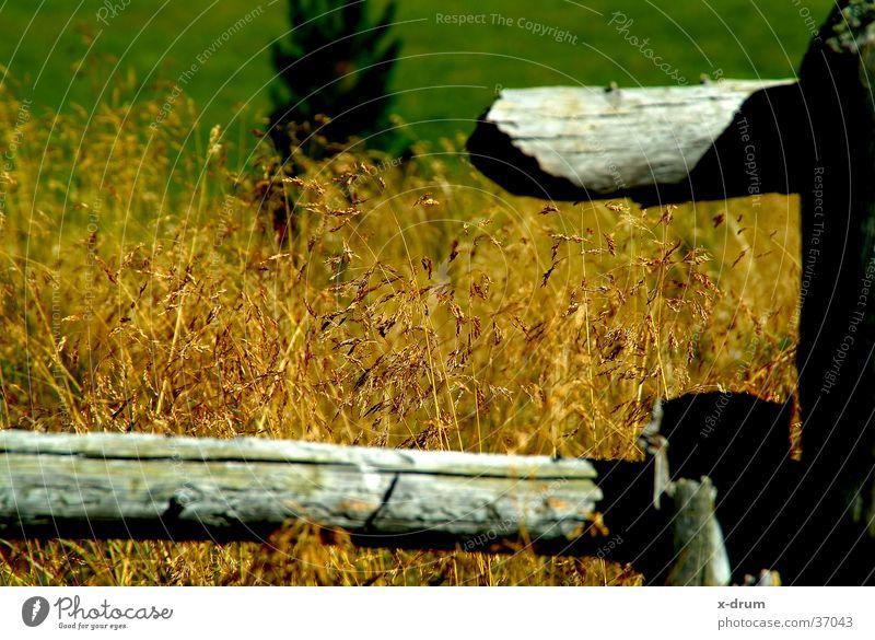 gras Herbst Gras Berge u. Gebirge Holz Zaun Alm
