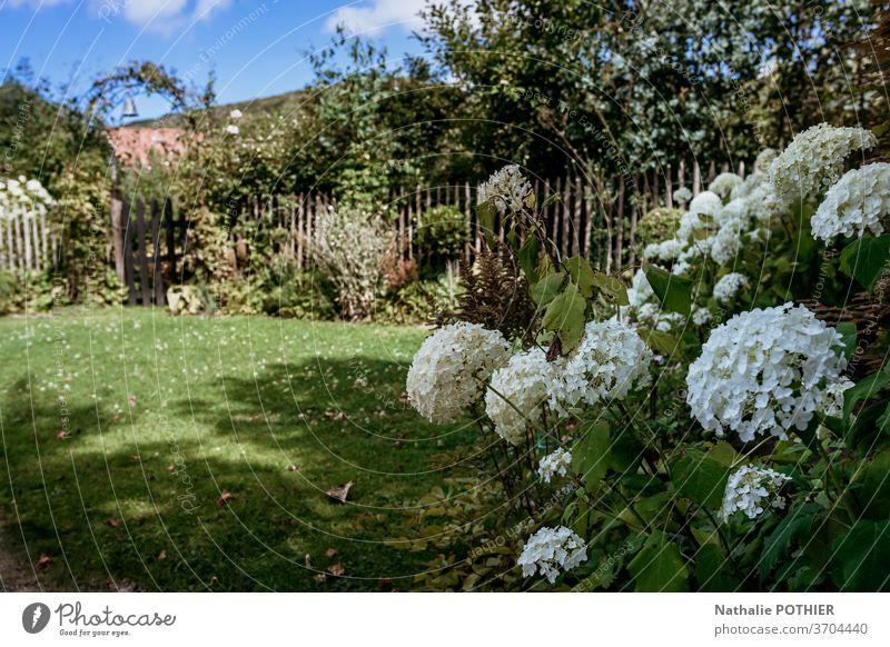 Wunderschöner Blumengarten mit kleinem Holztor und Haus im Hintergrund Garten hölzern Gate Cottage Bäume Blumenbeete Gartenarbeit Sommer Gras Rasen bunt
