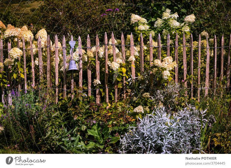 Wunderschöner Blumengarten mit weißen Hortensien und Holzzaun Garten Zaun hölzern Blumenbeete Gartenarbeit Sommer bunt außerhalb Frühling Saison Pflanze Park