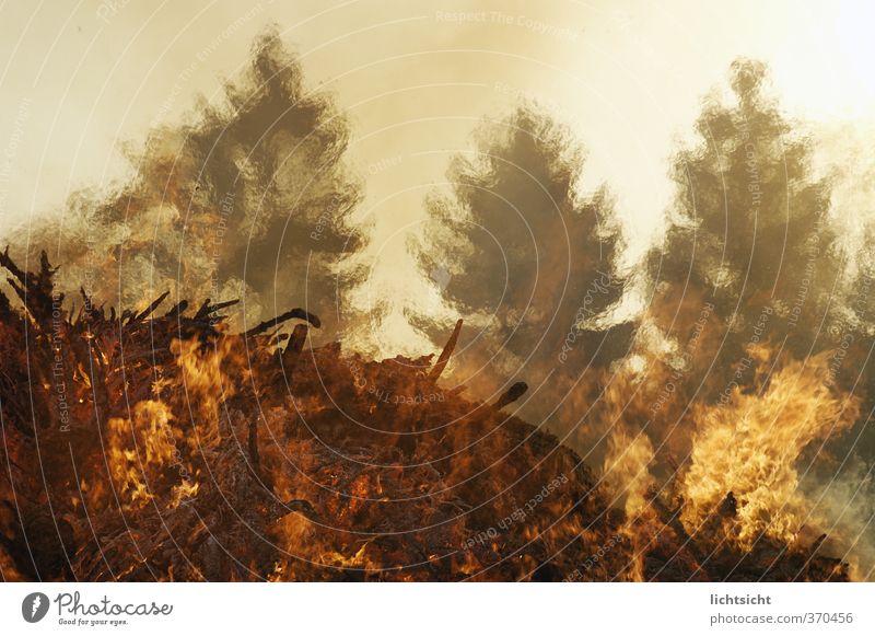 Sonnenbrand Urelemente Feuer Himmel Klima Klimawandel Wetter Wärme Baum Wald heiß glänzend glühen glühend Dürre Haufen Osterfeuer Waldbrand Luft Lichtbrechung