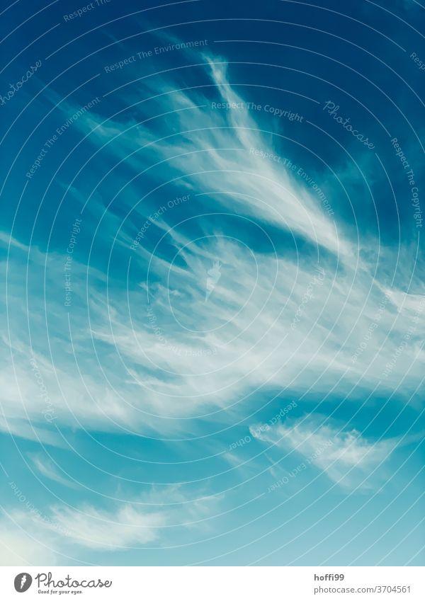 Wolken Wolkenhimmel Wind Wolkenschleier Wolkenformation Wolkendecke Wolkenfeld Wolkenbild Himmel Wolkenwand Klima Wetter blau Blauer Himmel Blauer Hintergrund