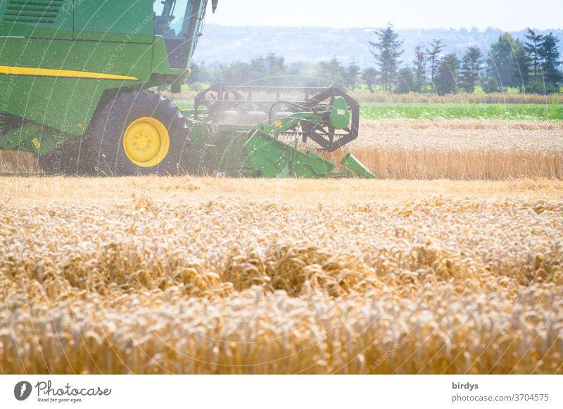 Mähdrescher bei der Getreideernte. Getreidefeld mit reifem Weizen, Agrarlandschaft Ernte heiß Erntezeit Arbeit Landwirtschaft Sommer ernten Staub Kornfeld