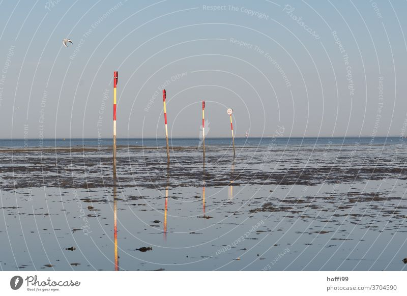 Stangen im Watt - der Möwe ist's egal  .... Badebereich Markierungslinie Wattenmeer Schwimmbad bewachter strand Strand Nordsee Wasser Sand Sonne Himmel Ebbe