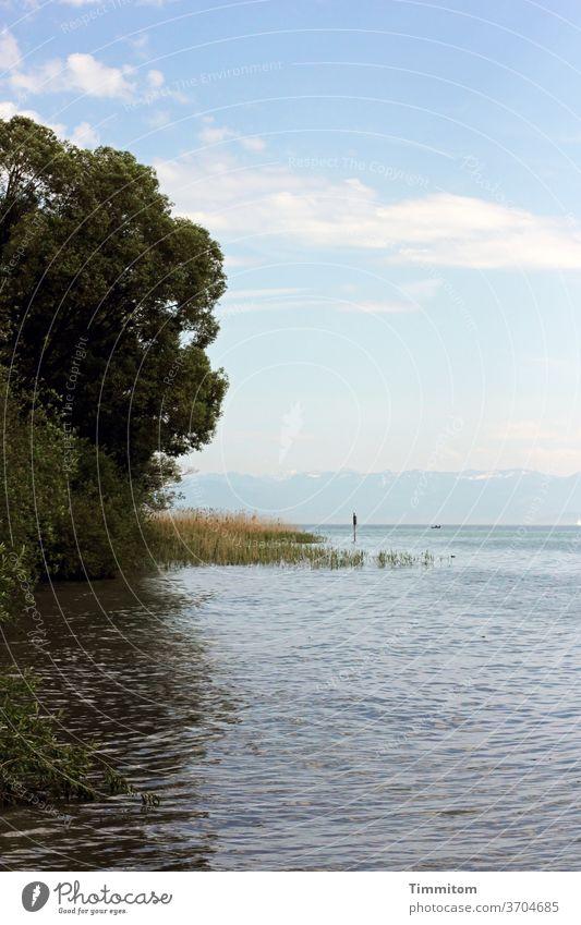 Den See hören und genießen Bodensee Wasser Ufer Strand Wellen Gräser Schilf Baum Natur Reflexion & Spiegelung Himmel Wolken blau weiß grün Berge Außenaufnahme