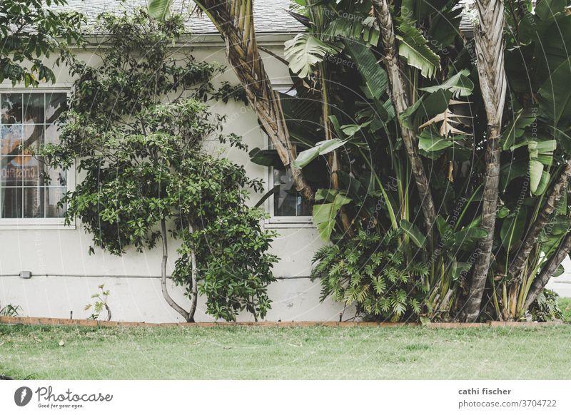 Pflanzen Palmen Mauer Außenaufnahme Menschenleer Bananengewächse grün Grünpflanze Haus Fenster Fassade Baum Sträucher Wachstum Tag Amerika Blatt