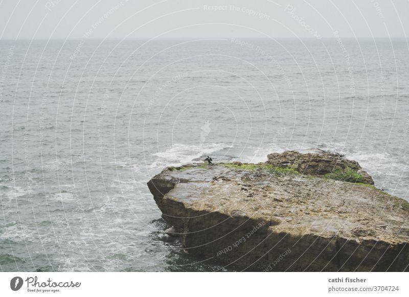 La Jolla Kalifornien Küste USA Farbfoto Natur Ferien & Urlaub & Reisen Sommer blau Tag amerika Amerika Landschaft Bucht Felsen Meer Wasser Himmel Pazifik Wellen
