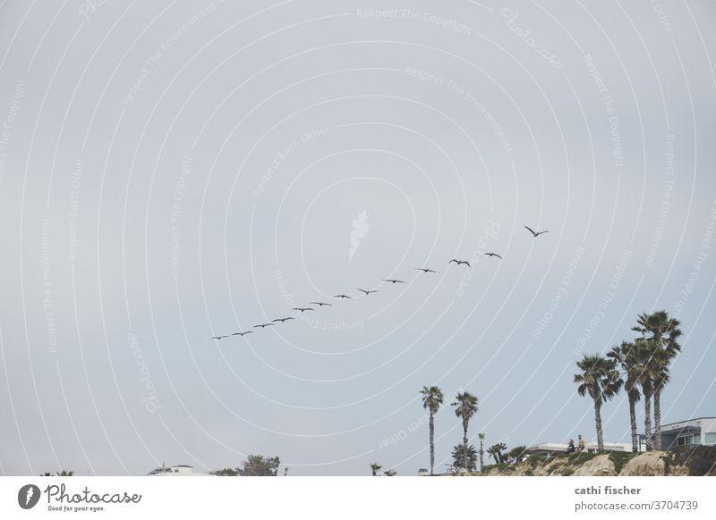 La Jolla Kalifornien Küste USA Farbfoto Natur Ferien & Urlaub & Reisen Sommer blau Tag amerika Amerika Landschaft Vögel fliegen Möwenvögel Möwenschwarm