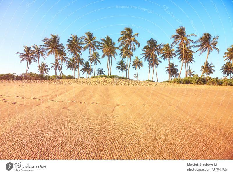 Tropischer Strand mit Kokosnusspalmen bei Sonnenuntergang. Handfläche Sommer Natur tropisch sich[Akk] entspannen Flucht Feiertage Urlaub Baum Sand Himmel