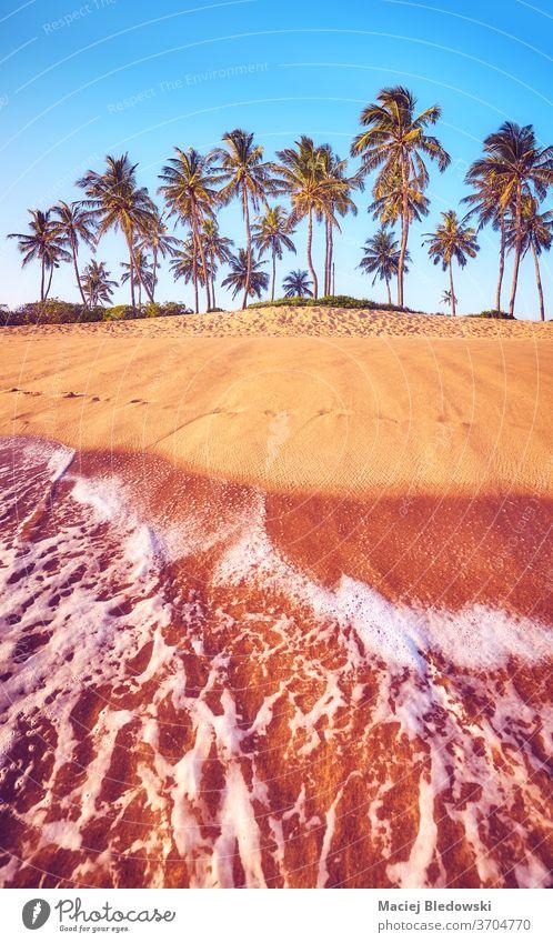 Tropischer Strand mit Kokosnusspalmen bei Sonnenuntergang. Handfläche Sommer Natur tropisch Wasser MEER sich[Akk] entspannen Flucht Feiertage Urlaub Baum Sand