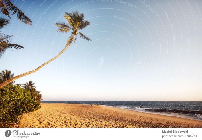Retro-getontes Bild eines leeren tropischen Strandes bei Sonnenuntergang. Handfläche Sommer Natur retro MEER sich[Akk] entspannen Flucht Feiertage Urlaub