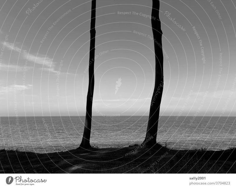 Durchblick zur Ostsee... Baum Meer Horizont Schwarzweißfoto schönes Wetter Baumstamm 2 krumm Idylle idyllisch Küste Landschaft Außenaufnahme Himmel Wasser Ferne