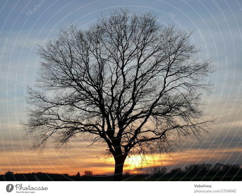 Eiche bei Sonnenuntergang abend abenddämmerung abendhimmel abends eiche natur sonnenuntergang baum abendsonne landschaft