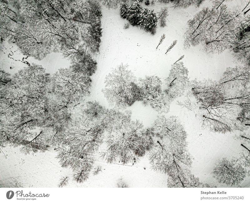 Bäume von oben im Winter schneebedeckt von einer Drohne gefilmt Hintergrund Baum Natur Saison Holz Kiefer im Freien verschneite Landschaft Wetter Eis gefroren