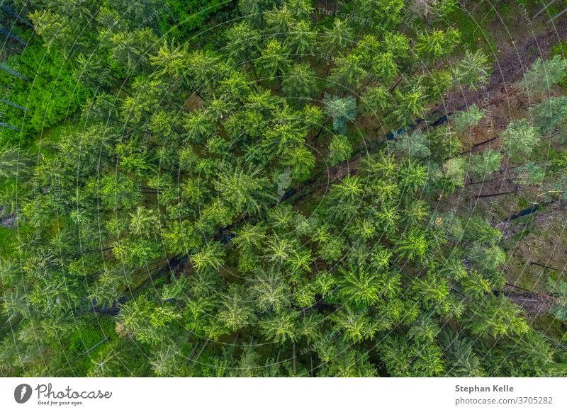 Blick aus der Vogelperspektive von der Drohne auf eine leere Straße durch den Wald mit hohen Bäumen. Antenne Hintergrund schön diagonal Dröhnen grün Natur Weg