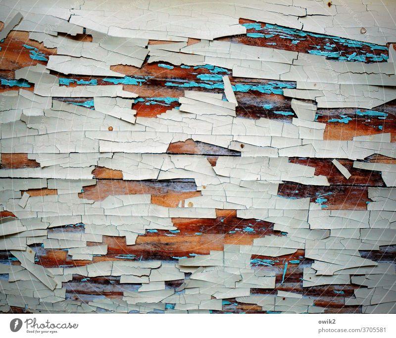 Nach und nach Holz alt Muster Außenaufnahme Strukturen & Formen Menschenleer Nahaufnahme abstrakt weiß abblättern verfallen Farbfoto Detailaufnahme
