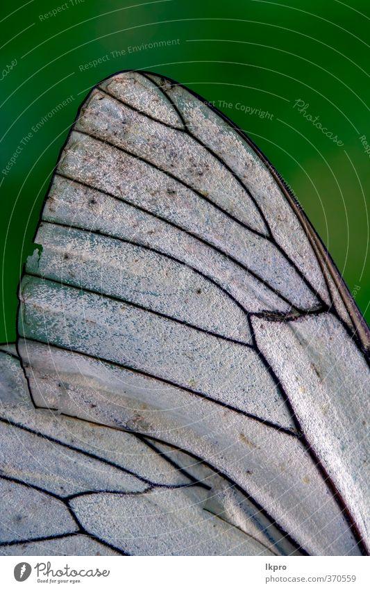 Natur grün weiß Farbe schwarz Garten Linie braun wild Insekt Schmetterling Ritterfalter