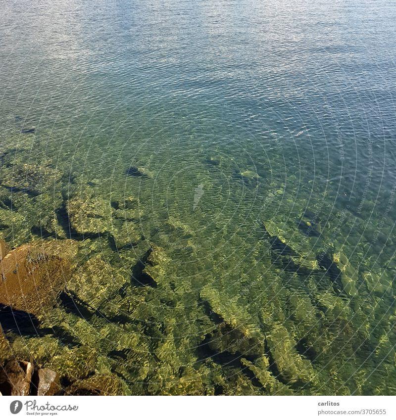 Der Seeboden vom Bodensee Wasser Steine Grund Reflexion grün türkis blau Reflexion & Spiegelung Wellen Natur Sommer Seeufer Schönes Wetter