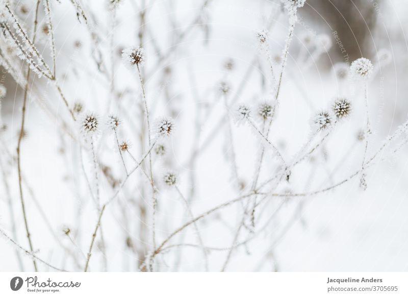 vereister Strauch im Winter Winterstimmung Wintertag Frost Baum gefroren kalt Eis Zweig Ast Schnee zerbrechlich erfrieren Kristallstrukturen Dezember