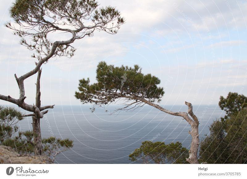 bizarr geformte Pinien am Steilufer von Mallorcas Westküste mit Blick aufs Mittelmeer mit Himmel und Wolken Baum Küste Steilküste Wasser Meer Horizont Aussicht