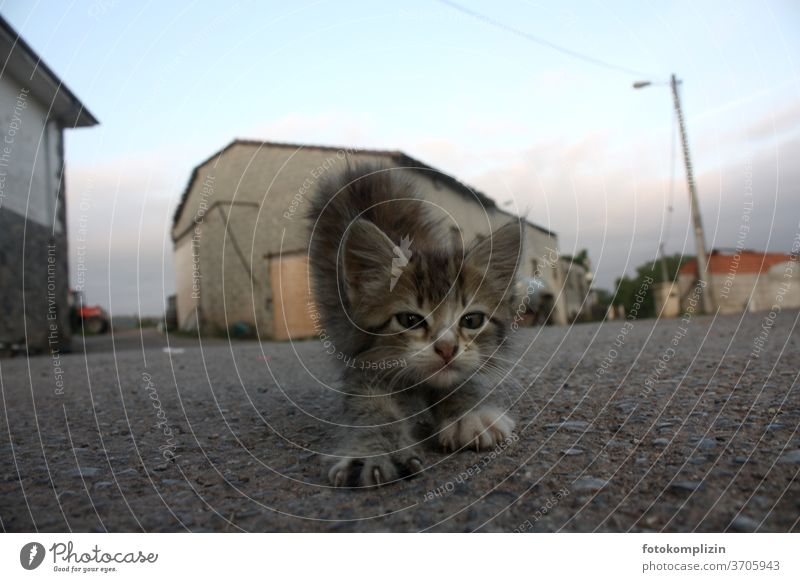 kleines Kätzchen streckt und reckt sich am frühen Morgen auf einer Dorfstraße Kätzchen Katze Katzenbaby katzenhaft strecken morgengymnastik Gymnastik Yoga