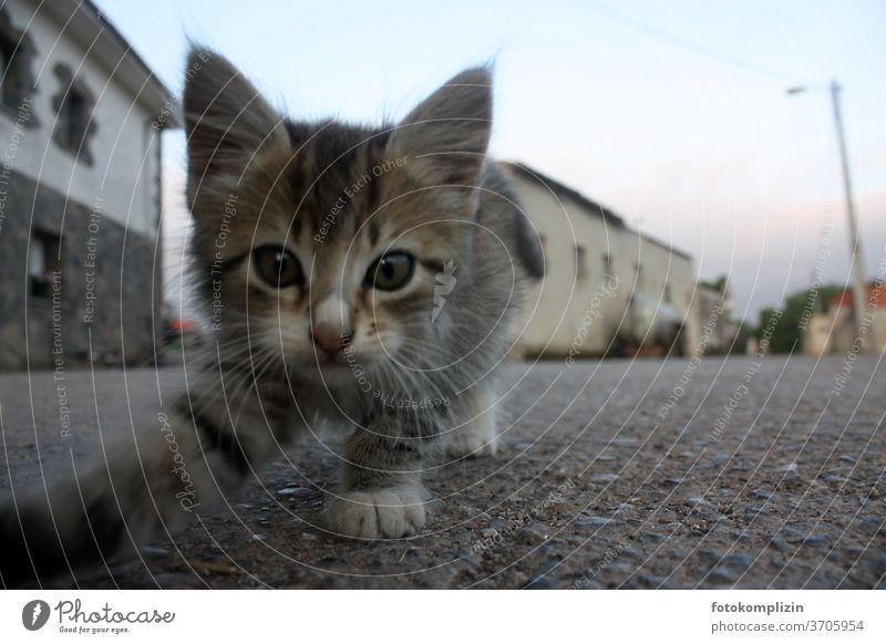 Guten Morgen - neugieriges kleines Kätzchen schaut in die Kamera auf einer spanischen Dorfstraße Katzenbaby inquisitorisch Tierporträt Haustier Katzenauge