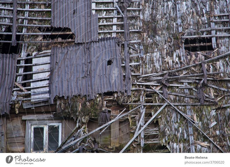 Es war einmal: maroder hölzerner Bauernhof Schwarzwaldhaus kaputt Holzhaus Außenaufnahme Haus Gebäude Wand Verfall Menschenleer Fassade Vergänglichkeit