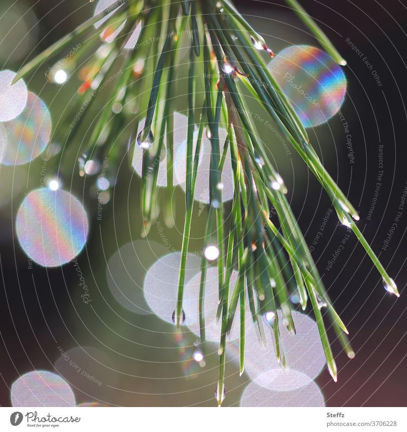 die Waldkiefer spielt mit Licht Kiefer Lichtreflexe Lichtspiel Nadelbaumblatt Reflexion Reflexion & Spiegelung Blatt Gedeckte Farben abstrakte Formen