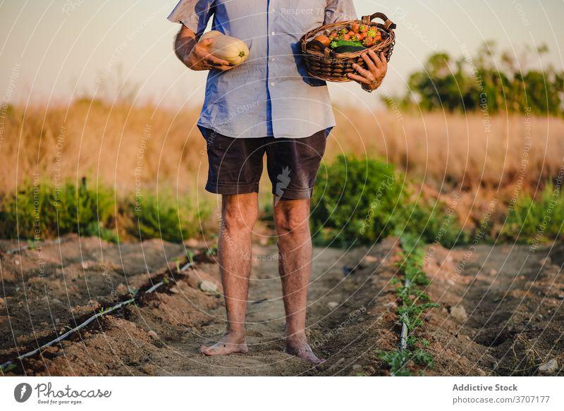 Anonymer älterer männlicher Gärtner mit Korb der Ernte Landwirt Mann Dorf Landschaft Garten Bett gealtert Ackerbau organisch Lebensmittel reif Saison natürlich