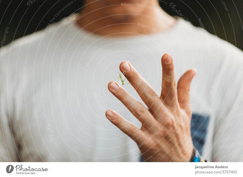 Nahaufnahme einer Hand mit Grashüpfer Heuschrecke Insekt grün Natur Tier Farbfoto klein Sommer Außenaufnahme Mann Junge Schwache Tiefenschärfe Detailaufnahme