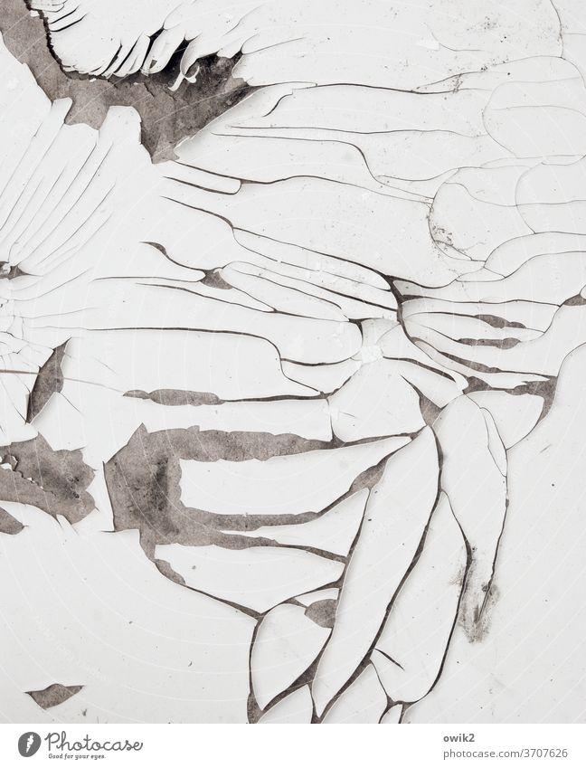Letzte Zuckungen Zahn der Zeit Verfall Farbe abblättern Spuren Außenaufnahme Wandel & Veränderung Zerstörung Nahaufnahme trashig Riss Menschenleer bizarr