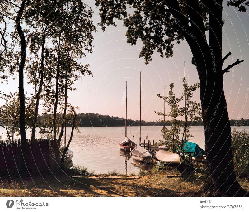 Privatvergnügen Panorama (Aussicht) Anlegestelle Idylle ruhig Steg Ruderboot Insel Seeufer Wald Baum Schönes Wetter Klima Herbst Horizont Wolkenloser Himmel