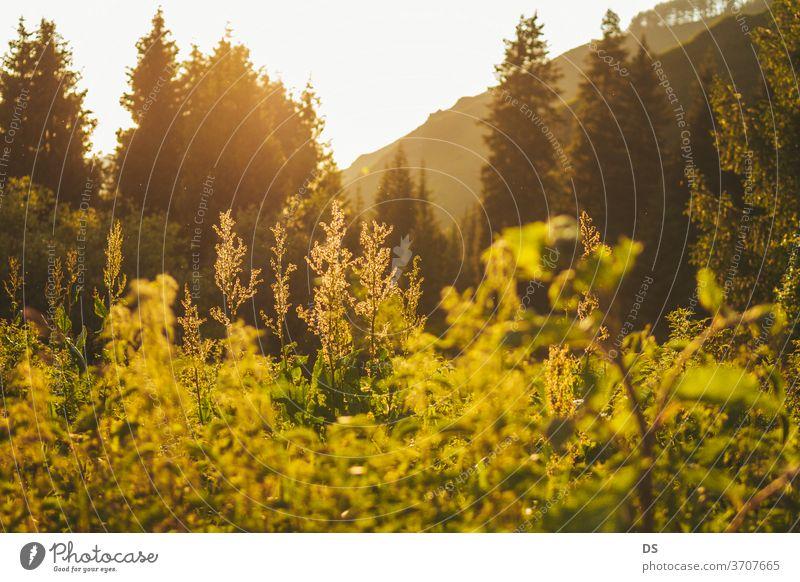 Grünes Gras mit magischem Licht und Schönheit der Natur bei Sonnenuntergang Fotos landwirtschaftlicher Felder Hintergrundfotos Fotos von Schönheit in der Natur