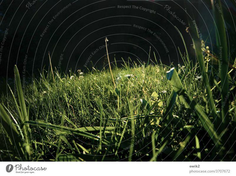 Gegend Wiese Gras Tag Landschaft Schönes Wetter Detailaufnahme Umwelt Menschenleer Frühling grün Außenaufnahme Textfreiraum oben frisch Natur Sonnenlicht
