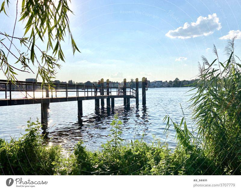 Am See Ufer Wasser Himmel Wolke Steg Schilf Potsdam Havel Tiefer See Bootssteg Natur Landschaft Außenaufnahme Farbfoto Seeufer Menschenleer ruhig