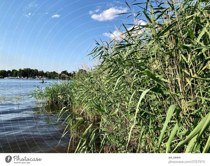 Am Seeufer Ufer Wasser Himmel Wolke Schilf Potsdam Havel Tiefer See Natur Landschaft Außenaufnahme Farbfoto Menschenleer ruhig Reflexion & Spiegelung Idylle