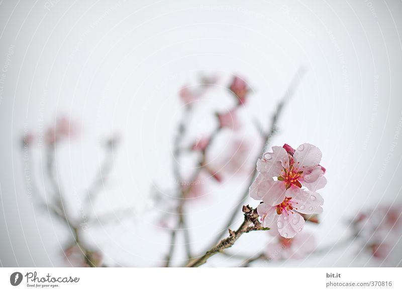Blüten Dekoration & Verzierung Feste & Feiern Valentinstag Muttertag Hochzeit Geburtstag Natur Pflanze Baum Sträucher exotisch Garten Park Blühend Duft Wachstum