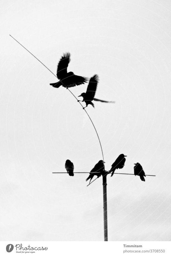 Vogeltanz vor mäßig interessiertem Publikum Rangordnung klären 6 Antenne dünn biegsam sitzen fliegen landen kämpfen spielen Tier Außenaufnahme Menschenleer