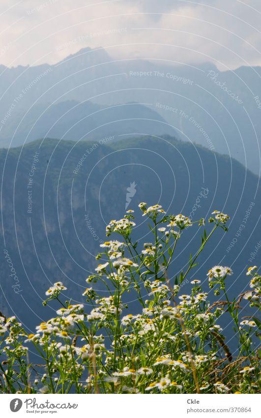 Vom Monte Brione Himmel Natur Ferien & Urlaub & Reisen blau grün weiß Pflanze Einsamkeit Landschaft ruhig Wolken gelb Berge u. Gebirge Freiheit Felsen Stimmung