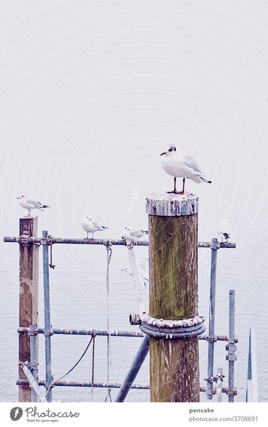 pole position Möwe Meinungsforscher Hafen Bodensee Sommer Anleger sitzen Außenaufnahme Vogel Wasser Seeufer Himmel Gedeckte Farben Landschaft
