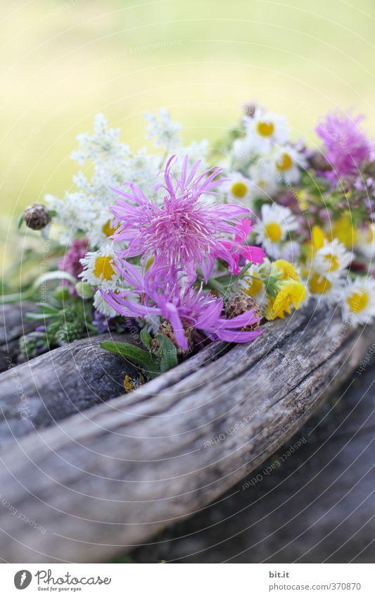 Wildblumen Ferien & Urlaub & Reisen Ausflug Feste & Feiern Valentinstag Muttertag Hochzeit Geburtstag Umwelt Natur Pflanze Frühling Sommer Herbst Garten Park