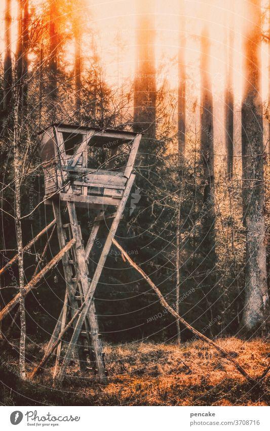 wenn der wald brennt Wald Feuer Hochsitz Brandgefahr Hitze Dürre Klimawandel brennen Sonnenuntergang Holz Hochstand