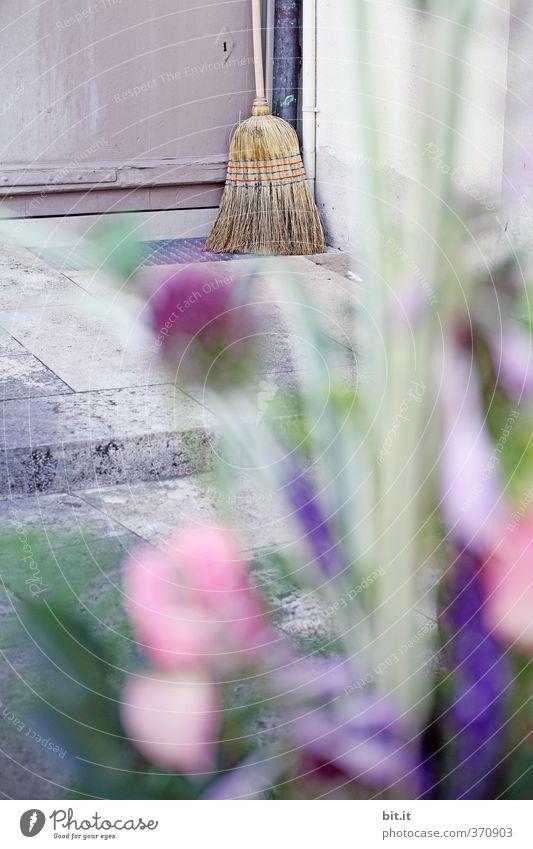 Blumen für die Hausfrau Blume Garten Arbeit & Erwerbstätigkeit Häusliches Leben Perspektive Ecke Reinigen Kreativität Autotür Blumenstrauß Dienstleistungsgewerbe Arbeitsplatz Gartenarbeit Blumentopf Verantwortung Haushaltsführung