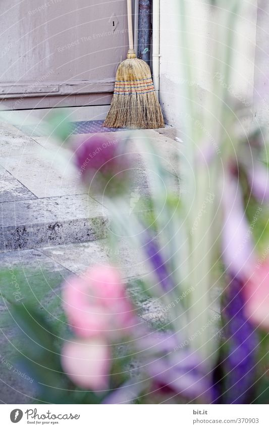 Blumen für die Hausfrau Garten Arbeit & Erwerbstätigkeit Häusliches Leben Perspektive Ecke Reinigen Kreativität Autotür Blumenstrauß Dienstleistungsgewerbe