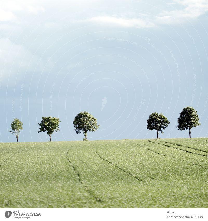 Baumgrenze baum bäume himmel acker landwirtschaft horizont baumgrenze wolken sonnig hell grün natur wachsen landschaft 5