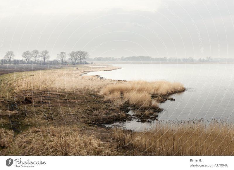 Rügen Umwelt Natur Landschaft Himmel Horizont Frühling Nebel Gras Küste natürlich ruhig Vorpommersche Boddenlandschaft Gewässer Gedeckte Farben Menschenleer