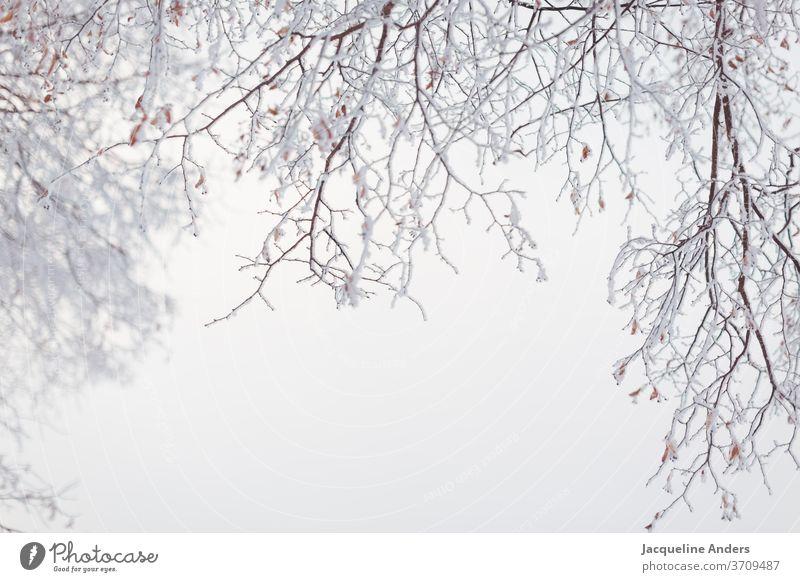 vereiste und verschneite Zweige hängen vom Baum im Nebel Eis kalt gefroren Winter Frost Kristallstrukturen Ast Schnee Makroaufnahme zerbrechlich erfrieren