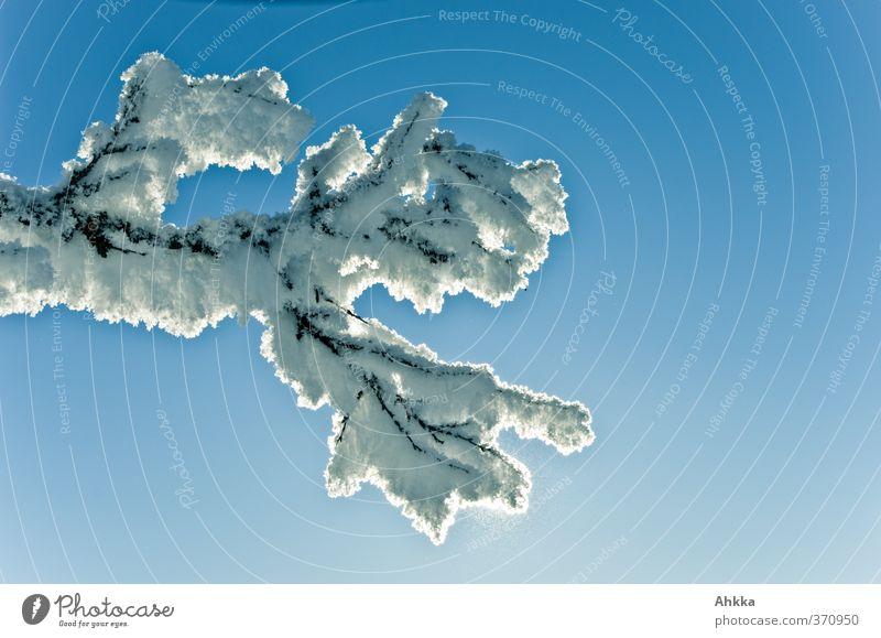 Winterlicher Ast mit Eiskristallen überzogen vor blauem Himmel Natur schön Sonne Baum Einsamkeit ruhig Tier kalt Schnee Freiheit Idylle elegant Zufriedenheit